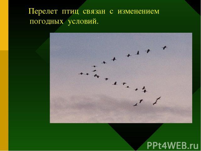Перелеты птиц связаны