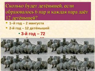 Сколько будет детёнышей, если образовалось 6 пар и каждая пара даёт 12 детёнышей