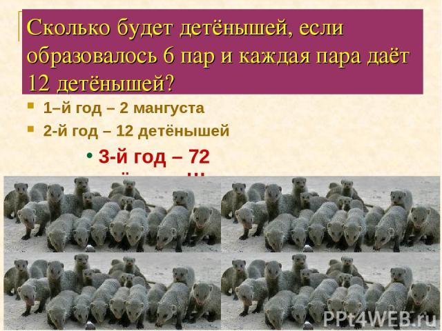 Сколько будет детёнышей, если образовалось 6 пар и каждая пара даёт 12 детёнышей? 1–й год – 2 мангуста 2-й год – 12 детёнышей 3-й год – 72 детёныша!!!