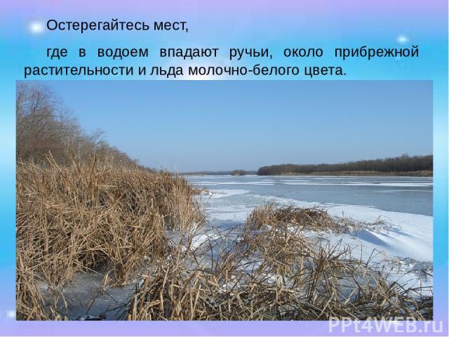 Остерегайтесь мест, где в водоем впадают ручьи, около прибрежной растительности и льда молочно-белого цвета.