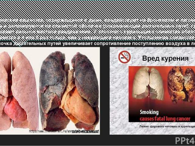 Химические вещества, содержащиеся в дыме, воздействуют на бронхиолы и легочную ткань и депонируются на слизистой оболочке (покрывающей дыхательные пути), где вызывают сильное местное раздражение. У злостного курильщика слизистая оболочка становится …