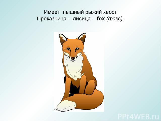 Имеет пышный рыжий хвост Проказница - лисица – fox (фокс).
