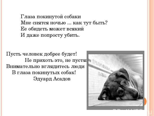 Глаза покинутой собаки Мне снятся ночью ... как тут быть? Ее обидеть может всякий И даже попросту убить. Пусть человек добрее будет! Не прихоть это, не пустяк.. Внимательно вглядитесь люди В глаза покинутых собак!  Эдуард Асадов