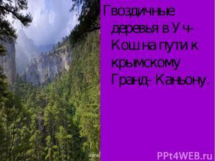 Гвоздичные деревья в Уч- Кош на пути к крымскому Гранд- Каньону.