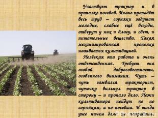 Участвует трактор и в прополке посевов. Иначе пропадёт весь труд – сорняки задуш