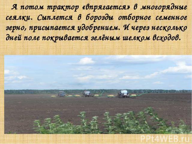 А потом трактор «впрягается» в многорядные сеялки. Сыплется в борозды отборное семенное зерно, присыпается удобрением. И через несколько дней поле покрывается зелёным шелком всходов.
