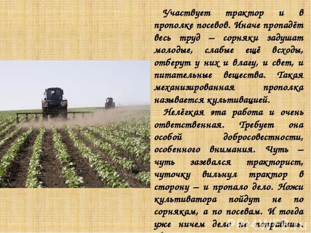 Участвует трактор и в прополке посевов. Иначе пропадёт весь труд – сорняки задушат молодые, слабые ещё всходы, отберут у них и влагу, и свет, и питательные вещества. Такая механизированная прополка называется культивацией. Нелёгкая эта работа и очен…