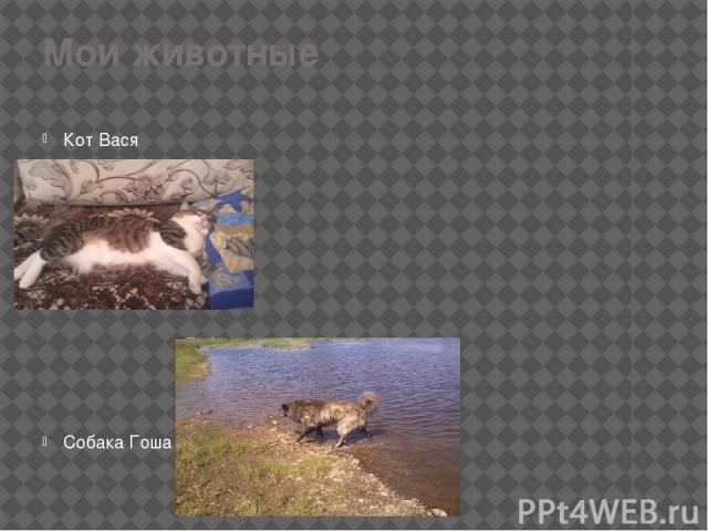 Мои животные Кот Вася Собака Гоша