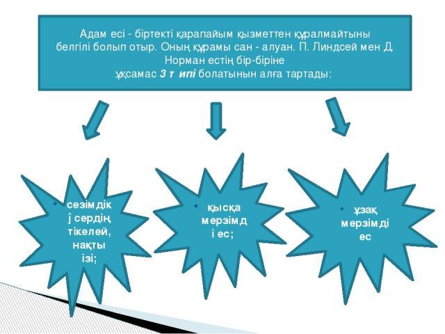 Адам есi - бiртектi қарапайым қызметтен құралмайтыны белгiлi болып отыр. Оның құрамы сан - алуан. П. Линдсей мен Д. Норман естiң бiр-бiрiне ұқсамас 3 типi болатынын алға тартады: ұзақ мерзiмдi ес қысқа мерзiмдi ес; сезiмдiк əсердiң тiкелей, нақты iзi;