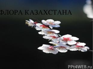 ФЛОРА КАЗАХСТАНА