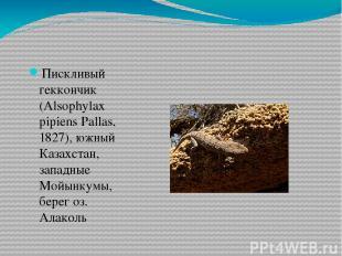 Пискливый геккончик (Alsophylax pipiens Pallas, 1827), южный Казахстан, западные