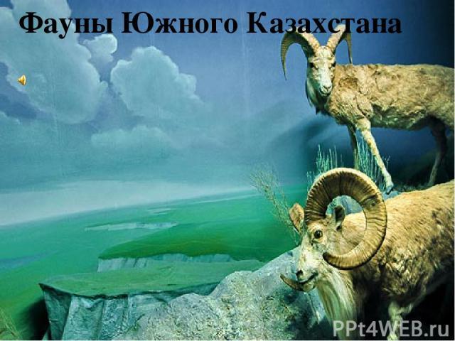 Фауны Южного Казахстана