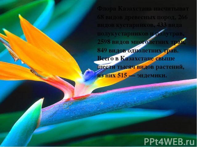 ФлораКазахстананасчитыват 68 видов древесных пород, 266 видовкустарников, 433 видаполукустарниковиполутрав, 2598 видов многолетнихтрав, 849 видов однолетних трав. Всего вКазахстанесвыше шести тысяч видоврастений, из них 515—эндемики.