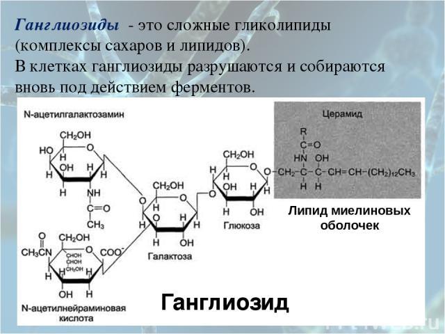 Ганглиозиды - это сложные гликолипиды (комплексы сахаров и липидов). В клетках ганглиозиды разрушаются и собираются вновь под действием ферментов.