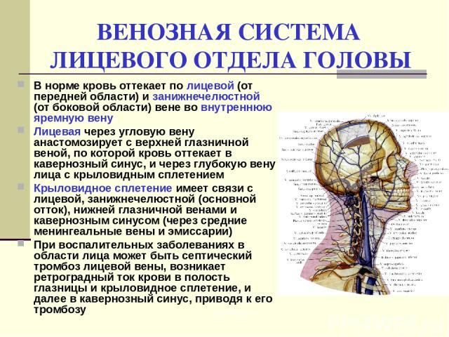 ВЕНОЗНАЯ СИСТЕМА ЛИЦЕВОГО ОТДЕЛА ГОЛОВЫ В норме кровь оттекает по лицевой (от передней области) и занижнечелюстной (от боковой области) вене во внутреннюю яремную вену Лицевая через угловую вену анастомозирует с верхней глазничной веной, по которой …