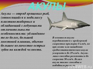АКУЛЫ Акулы— отрядхрящевых рыб, (относящийся к подклассу пластиножаберных и об
