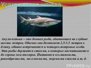 Усатая акула-нянька Акула-нянька – это донная рыба, обитающая на глубине шести м