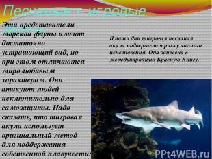 Песчаные тигровые акулы Эти представители морской фауны имеют достаточно устраша