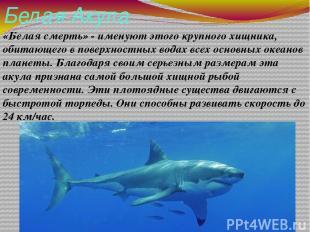Белая Акула «Белая смерть» - именуют этого крупного хищника, обитающего в поверх