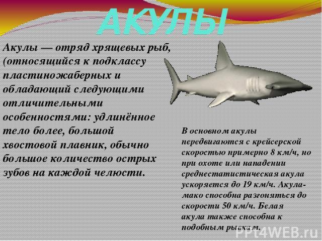АКУЛЫ Акулы— отрядхрящевых рыб, (относящийся к подклассу пластиножаберных и обладающий следующими отличительными особенностями: удлинённое тело более, большой хвостовой плавник, обычно большое количество острых зубов на каждой челюсти. В основном …