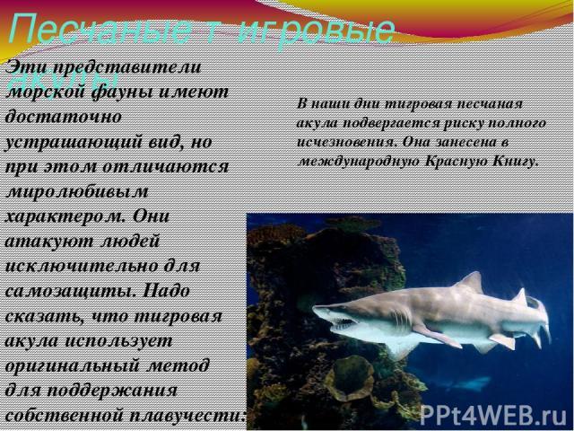 Песчаные тигровые акулы Эти представители морской фауны имеют достаточно устрашающий вид, но при этом отличаются миролюбивым характером. Они атакуют людей исключительно для самозащиты. Надо сказать, что тигровая акула использует оригинальный метод д…