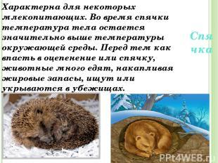 Спячка Характерна для некоторых млекопитающих. Во время спячки температура тела