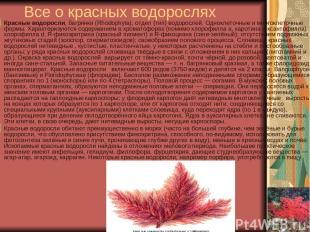 Все о красных водорослях Красные водоросли, багрянки (Rhodophyta), отдел (тип) в
