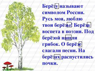 Берёзу называют символом России. Русь моя, люблю твои берёзы! Берёза воспета в п
