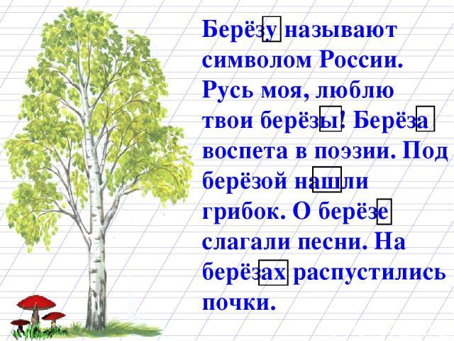 Берёзу называют символом России. Русь моя, люблю твои берёзы! Берёза воспета в поэзии. Под берёзой нашли грибок. О берёзе слагали песни. На берёзах распустились почки.