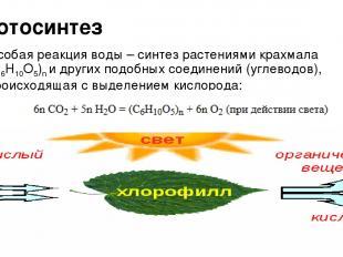 Фотосинтез Особая реакция воды – синтез растениями крахмала (C6H10O5)n и других