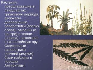 Растения, преобладавшие в ландшафтах триасового периода, включали древовидные па