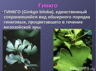Гинкго ГИНКГО (Ginkgo biloba), единственный сохранившийся вид обширного порядка