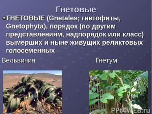 Гнетовые ГНЕТОВЫЕ (Gnetales; гнетофиты, Gnetophyta), порядок (по другим представ