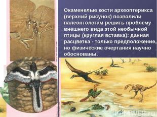 Окаменелые кости археоптерикса (верхний рисунок) позволили палеонтологам решить
