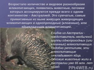 Возрастало количество и видовое разнообразие млекопитающих, появились животные,
