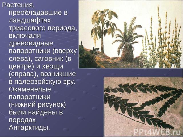 Растения, преобладавшие в ландшафтах триасового периода, включали древовидные папоротники (вверху слева), саговник (в центре) и хвощи (справа), возникшие в палеозойскую эру. Окаменелые папоротники (нижний рисунок) были найдены в породах Антарктиды.
