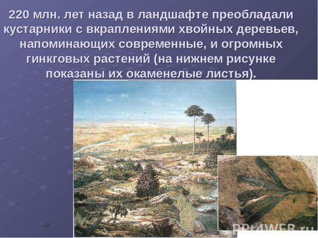 220 млн. лет назад в ландшафте преобладали кустарники с вкраплениями хвойных деревьев, напоминающих современные, и огромных гинкговых растений (на нижнем рисунке показаны их окаменелые листья).