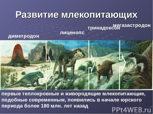 Развитие млекопитающих диметродон лиценопс тринадоксон мегазастродон первые теплокровные и живородящие млекопитающие, подобные современным, появились в начале юрского периода более 180 млн. лет назад