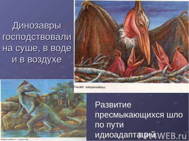 Динозавры господствовали на суше, в воде и в воздухе Развитие пресмыкающихся шло по пути идиоадаптаций