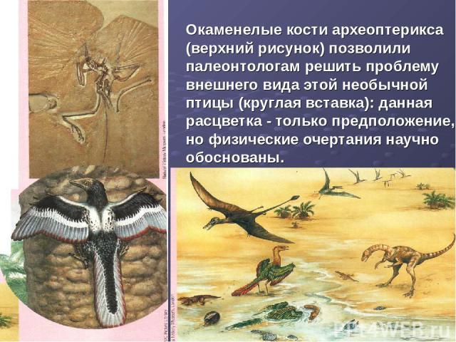 Окаменелые кости археоптерикса (верхний рисунок) позволили палеонтологам решить проблему внешнего вида этой необычной птицы (круглая вставка): данная расцветка - только предположение, но физические очертания научно обоснованы.