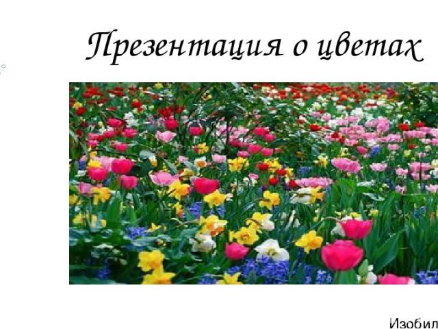 Презентация о цветах Изобильный 2016