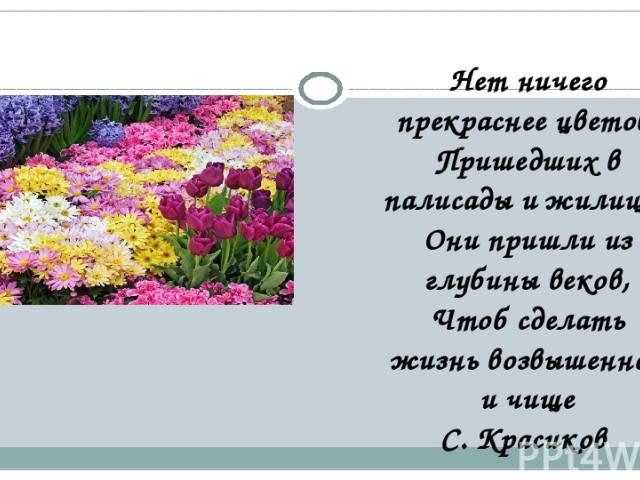 Нет ничего прекраснее цветов, Пришедших в палисады и жилища, Они пришли из глубины веков, Чтоб сделать жизнь возвышенней и чище С. Красиков