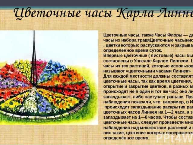 Цветочные часы Карла Линнея Цветочные часы, такжеЧасы Фло ры— декоративныечасыиз набора травяЦвето чные часы нистыхрастений,цветкикоторых распускаются и закрываются в определённое время суток. Впервые цветочные ( листовые) часы были составле…