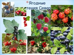 Ягодные растения Севера