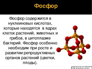 Фосфор Фосфор содержится в нуклеиновых кислотах, которые находятся в ядрах клето