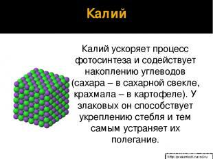 Калий Калий ускоряет процесс фотосинтеза и содействует накоплению углеводов (сах