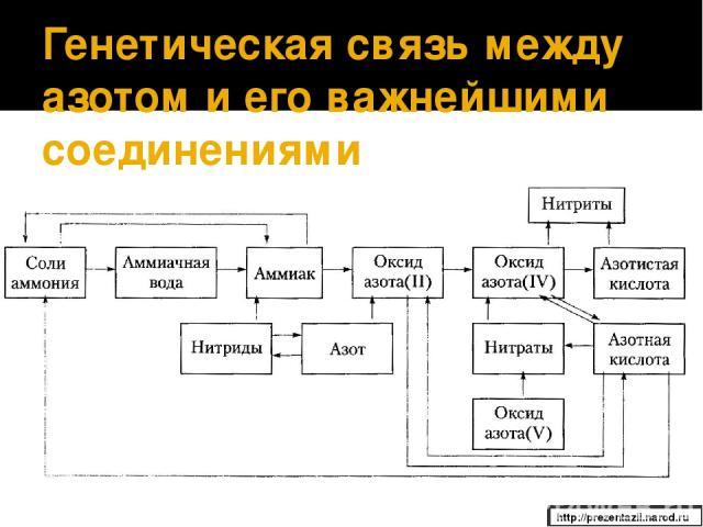 Генетическая связь между азотом и его важнейшими соединениями http://prezentazii.narod.ru
