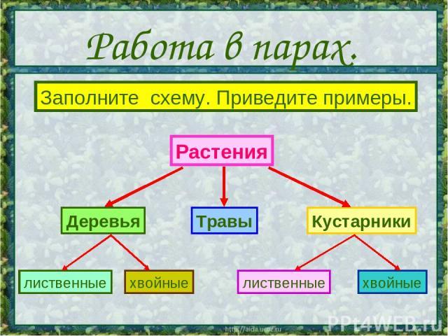 Работа в парах. Растения Кустарники Деревья Травы хвойные лиственные лиственные хвойные Заполните схему. Приведите примеры.