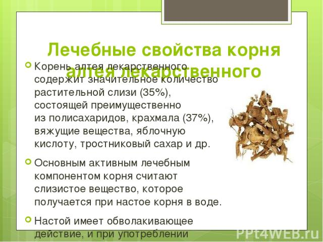 Лечебные свойства корня алтея лекарственного Корень алтея лекарственного содержит значительное количество растительной слизи (35%), состоящей преимущественно изполисахаридов, крахмала (37%), вяжущие вещества, яблочную кислоту, тростниковый сахар и…