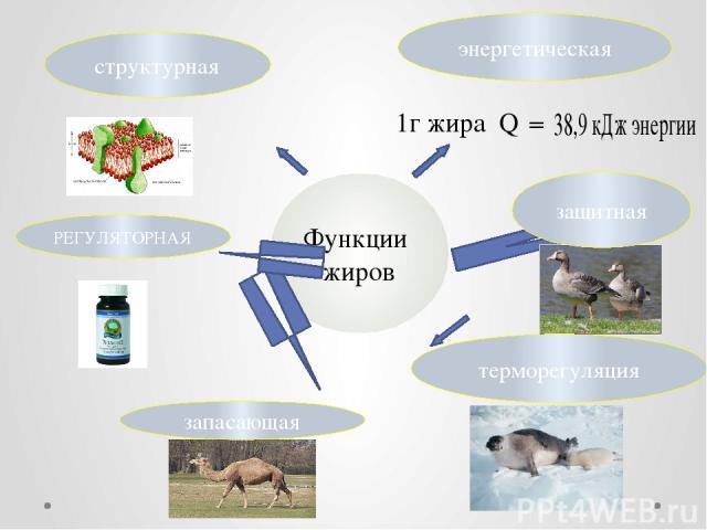 Функции жиров энергетическая 1г жира Q  РЕГУЛЯТОРНАЯ терморегуляция запасающая защитная структурная